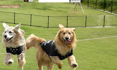 出典:新横浜公園ドッグランHP