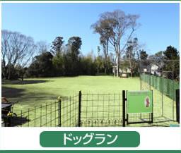 出典:http://www.dogcrew-lucky.jp/
