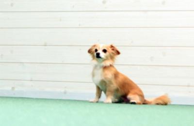 出典:KIBA GARDEN http://www.indoordogrun.com/