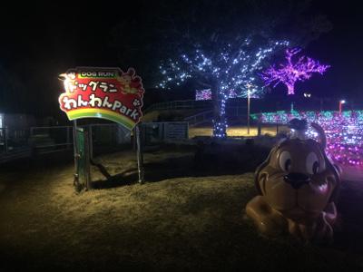 出典:ドッグランサーチ.com イルミネーション時の夜のドッグラン