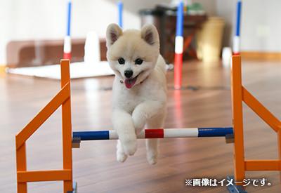 出典:愛犬ヴィレッジ公式サイト