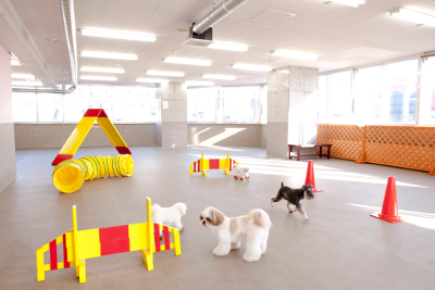 Dog & Cat Waltz公式サイト