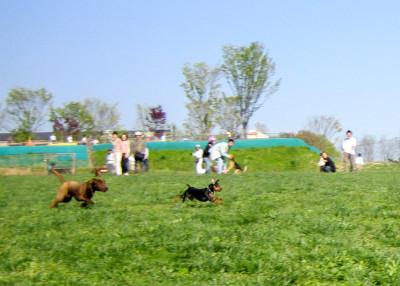 出典:世界の名犬牧場公式サイト