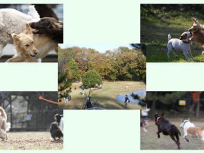 出典:犬の森 POM 公式サイト