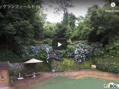 出典:ドッグランフィールド in 大阪公式サイト